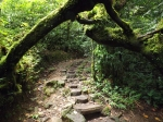 Cool jungle path.