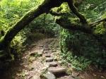Cool jungle path.